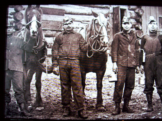 Big Charlie, a mine horse, is trapped underground for a month before being found by miners.