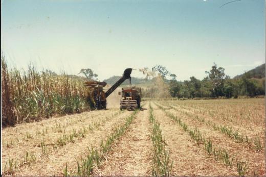 Harvesting Cane in Sarina, Queensland, Australia 1990's