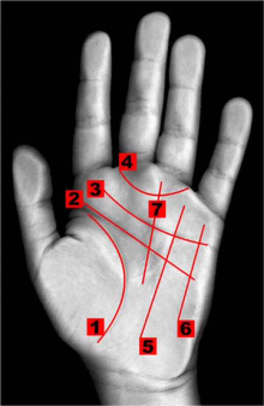 1-LIFE 2-HEAD 3-HEART 4-GIRDEL OF VENUS 5-SUN 6-MERCURY 7-FATE