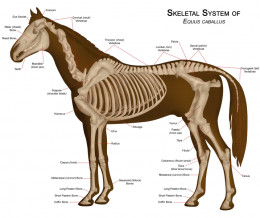 fish: four animal skeletal systems -- Kids Encyclopedia ...
