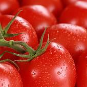 macro tomatoes (?GMO?)