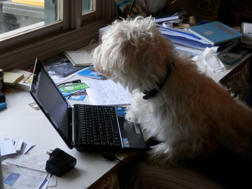 Nellie writing her tips on Dog Sitting.