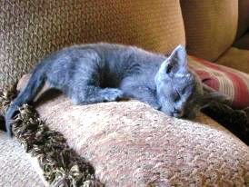 Kittens like Sarah need their beauty sleep -- as much as 19 hours a day.  They secrete growth hormone while catching z's.