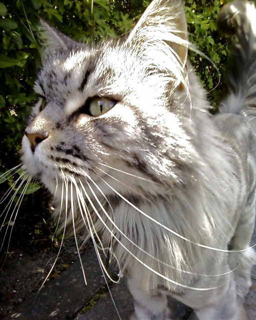This cat has exceptionally long whiskers. Truly fits the idiom - the cat's pajamas or the cat's whiskers – considering something or someone to be exceptional.