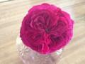 Rouge Royal Rose Hybrid Tea