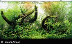 Planted Aquarium Filters and Accessories
