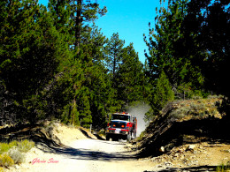 Fire and Forestry vehicles pounded down the narrow canyon road.