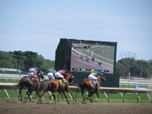Horses in the Final Stretch at Monmouth Park in New Jersey.