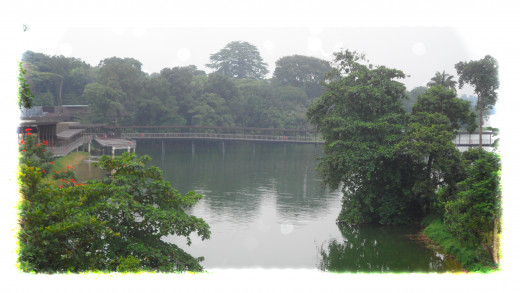 The Seletar Reservoir, over which the River Safari is located.
