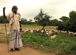 A shepherd with his staff and sheep