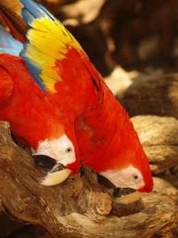 Native Mexican birds found in XCaret.