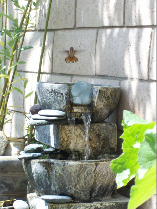 Water is important for drinking and bathing. We use a small pump and recycling water fall, but also standing bird bath bowls for other bird species.