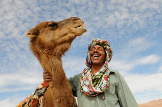 Camels make their way through the Denakil desert in Ethiopia, carrying satchels of salt. This trek back takes around 2 weeks.