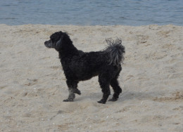 Oliver standing at attention at the beach! Was that a seagull ?