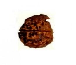 Ganesha Rudraksha Bead