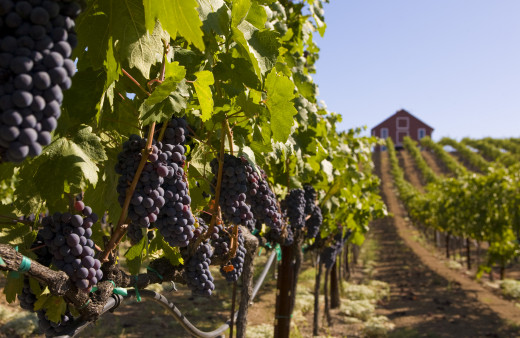 Visit the gorgeous Napa Valley!
