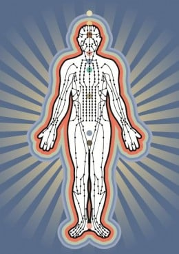 The body's electrical system.