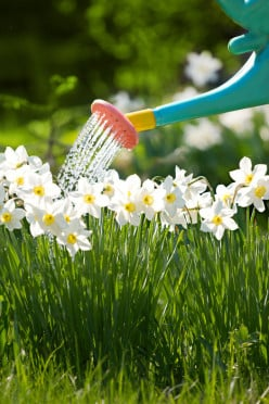 Use watering can to shower the flowers and lawn