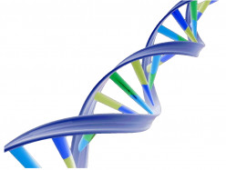 Why is it ethical or unethical to patent human genes?
