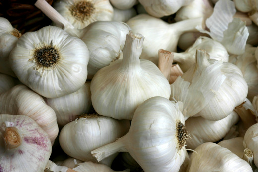 Garlic has many health and medicinal properties when eaten or used in remedies such as tinctures and syrups.