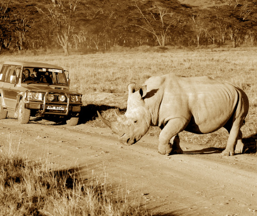 Seeing the rhino on safari may soon be a thing of the past