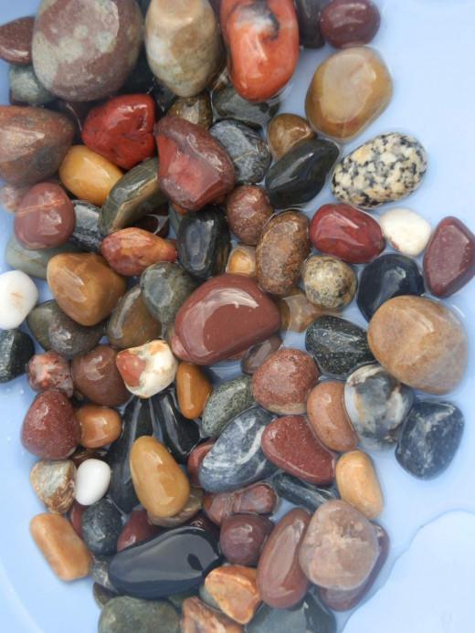 bathing pet rocks