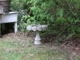 Bird Bath placement near bush.