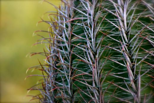 Barrel cactus pattern