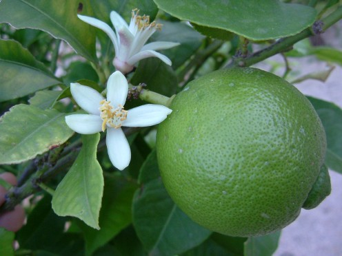 naturally heals the skin and is great at reducing any rashes or inflammation.