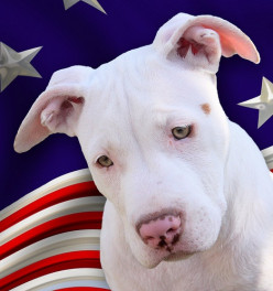 Five Best Dog Breeds From America