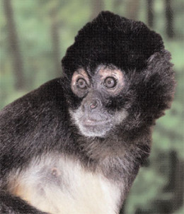 Monkeys' brains show the same plaque buildup, but they don't get Alzheimer's