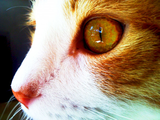The Eye of my cat Fritz