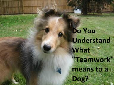 """A dog's view of """"team"""" and a human's view of """"team"""" can be vastly different."""