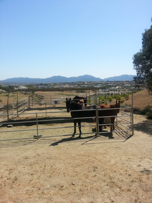 One of the many corrals with rescued horses at Villa Chardonnay.