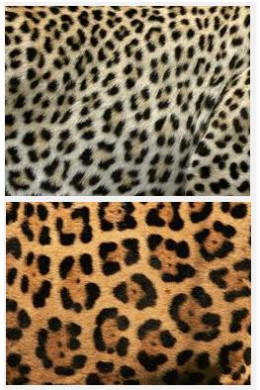 Difference between jaguar and leopard spots