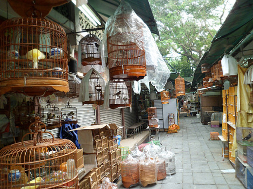 Bamboo cage in all shapes and prices for sale