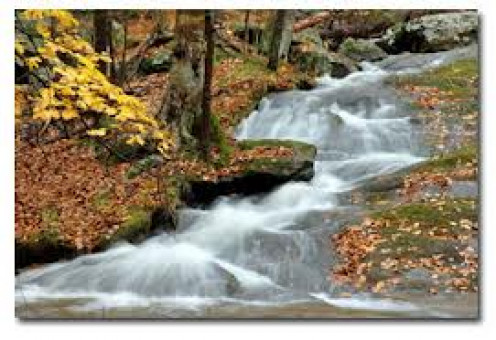 Rocky Branch has hiking, camping and fishing with many streams throughout the woods.