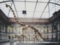 Interesting Facts About The Brachiosaurus