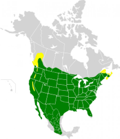 Range map of House Finches Adapted from: Smitsonian field guide to the birds of North America (See capsule 'Range.')