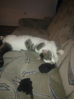 This is just him relaxing, not yet fully grown, when we arrived at our new place in Hungary