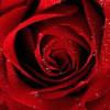 RoseLopez7 profile image