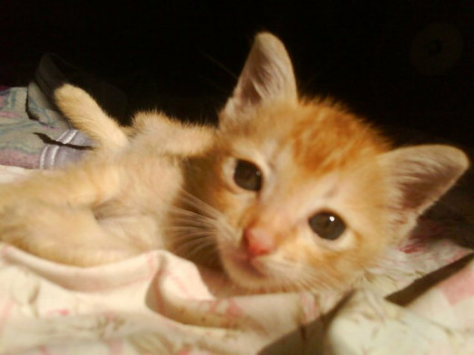 My female ginger kitten that I have found and adopt (photo 2)