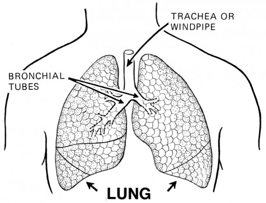 Pneumonia can affect either one lung or both. When both lungs are affected this is called double pneumonia.