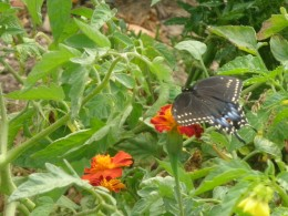 Identifying butterflies is one of the fun activities at Franklin Park.