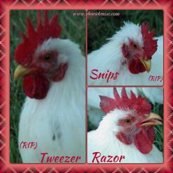 Razor, Tweezer & Snips