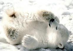 Photo Series-Polar Bears