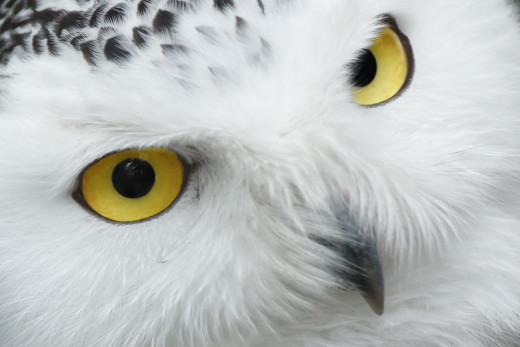 The original owl picture downloaded from pixabay.