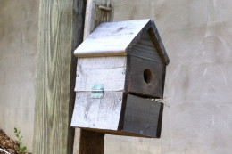 Bluebird house in my yard. This one is a few years old and is currently occupied. The bluebird scared me while I was taking this picture.