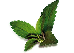 Stevia leaf, source of stevia sweetener