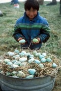 Is It Healthy To Eat Eggs?